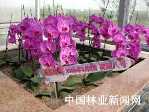 资讯生活西安世园会:航天科技对花卉的深情眷顾